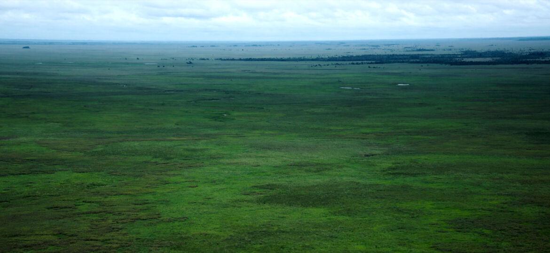Vista aérea del los llanos del Beni o sabana, una de las ecorregiones más grandes de Bolivia